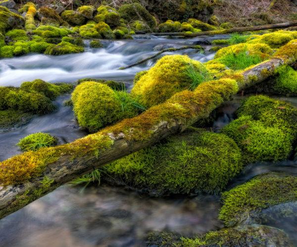 Landschaftsfotografie Moos